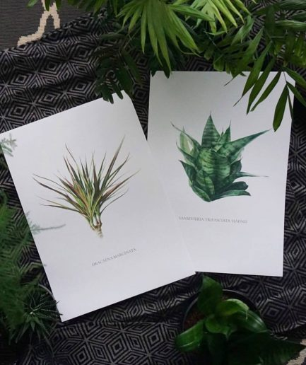 Botanical watercolour poster print Dracaena