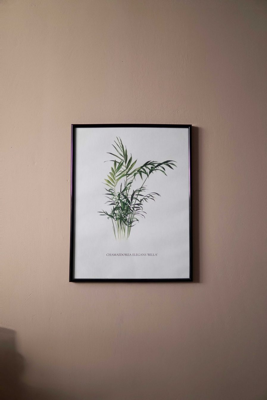 Botanical watercolour poster print Bamboo palm No. 1