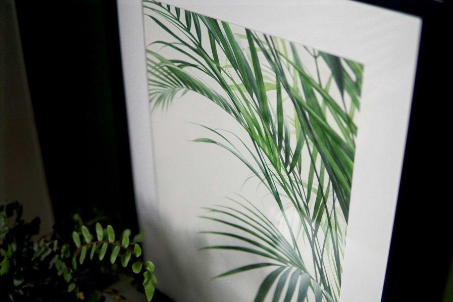 Botanical watercolour poster print Bamboo palm No. 2Botanical watercolour poster print Bamboo palm No. 2