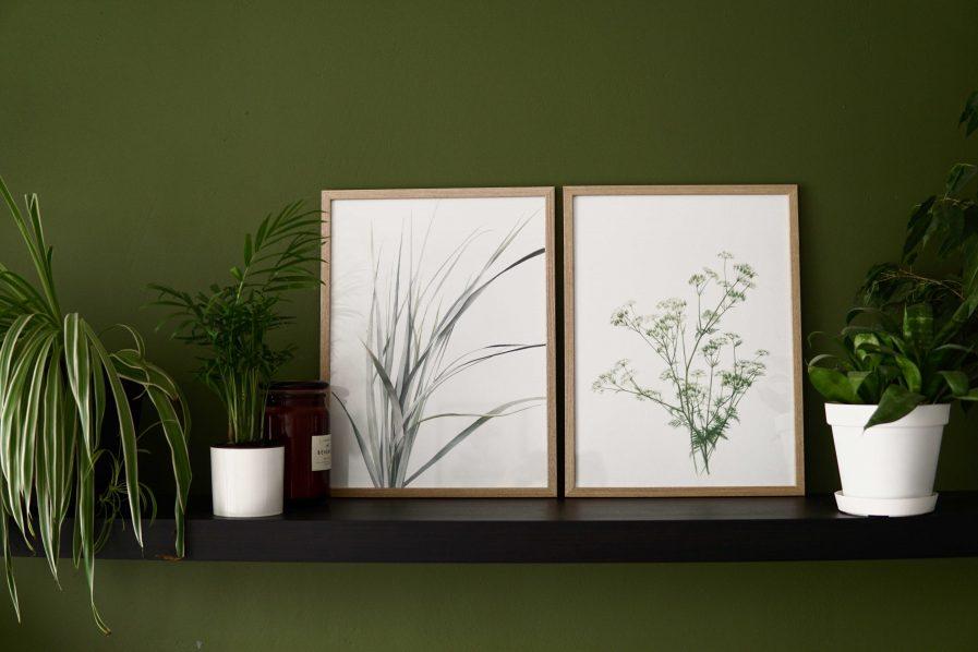 Botanical watercolour poster print WILD CHERVIL