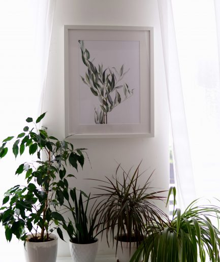 Botanical watercolour poster print WILLOW