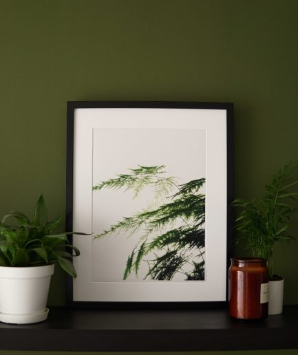 Botanical watercolour poster print ASPARAGUS FERN